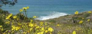 Torrey-Pines-Trail-Flowers-banner
