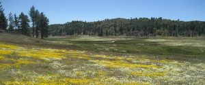 Big Laguna Meadow banner